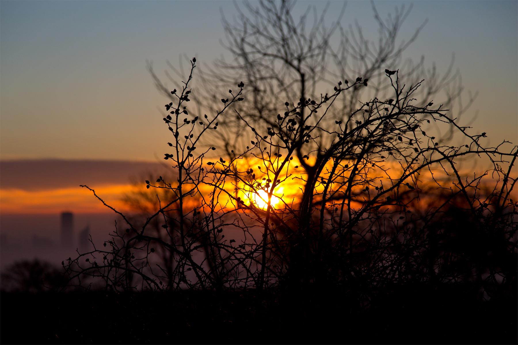 Hagebutten, Sonnenaufgang