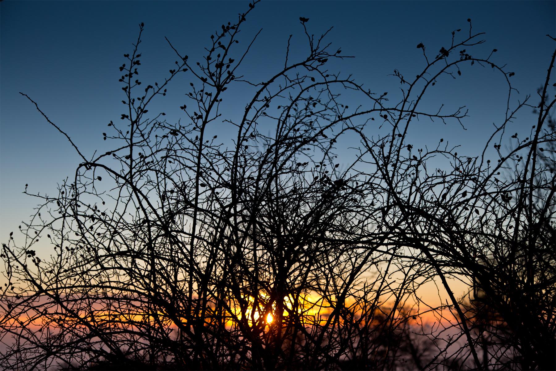 Vor der aufgehenden Sonne