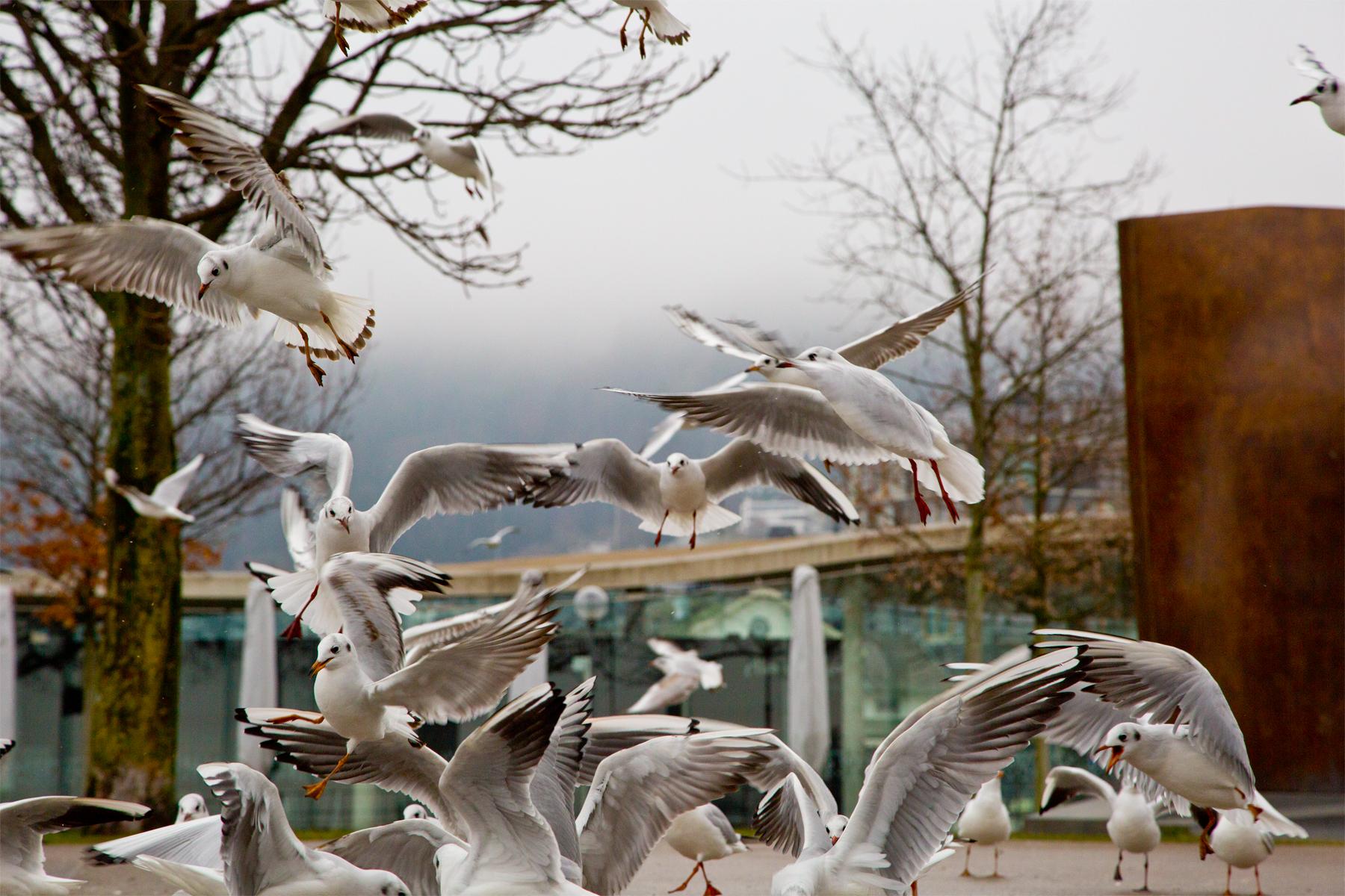 Möwen im Bregenzer Hafen