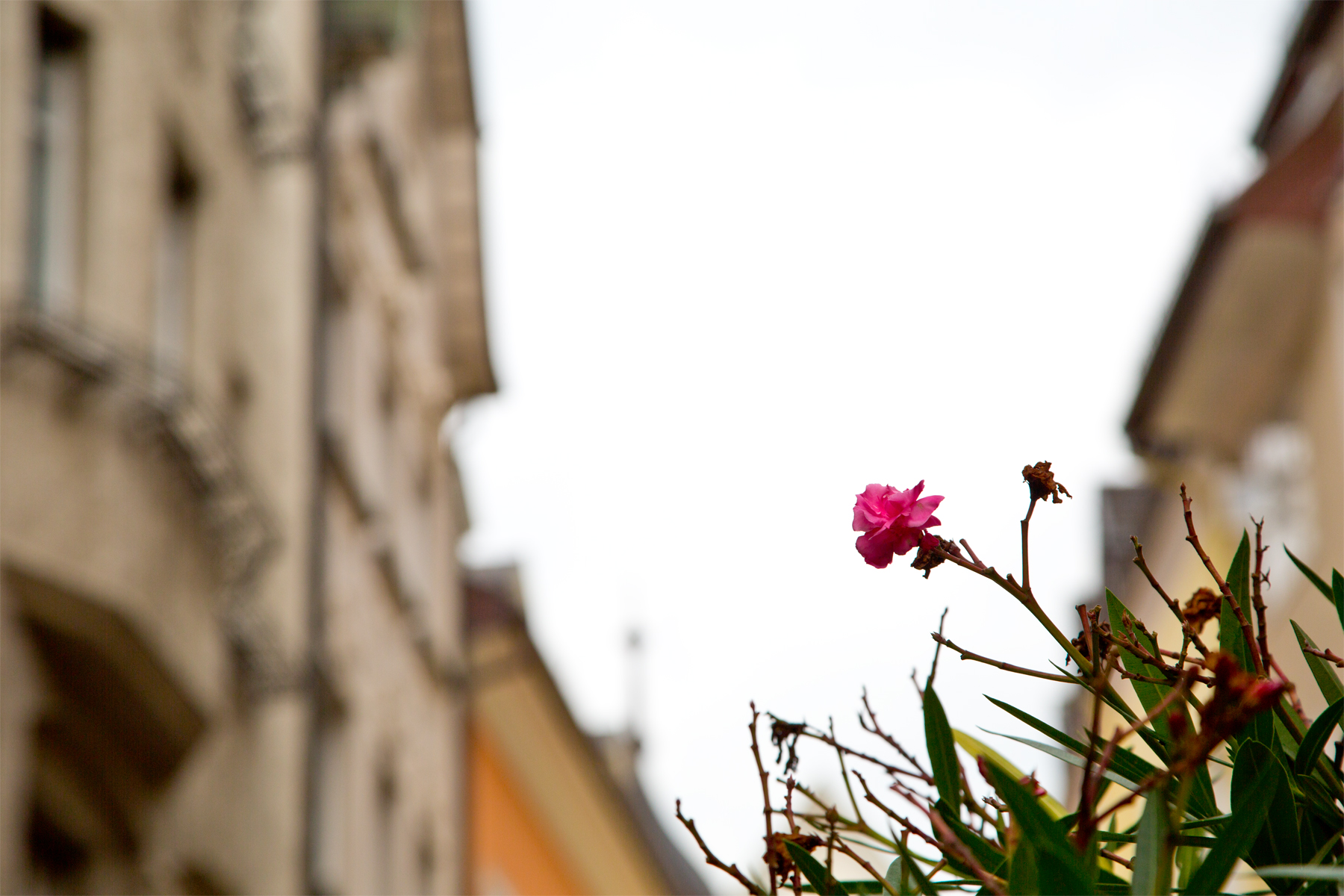Einsame Blühte