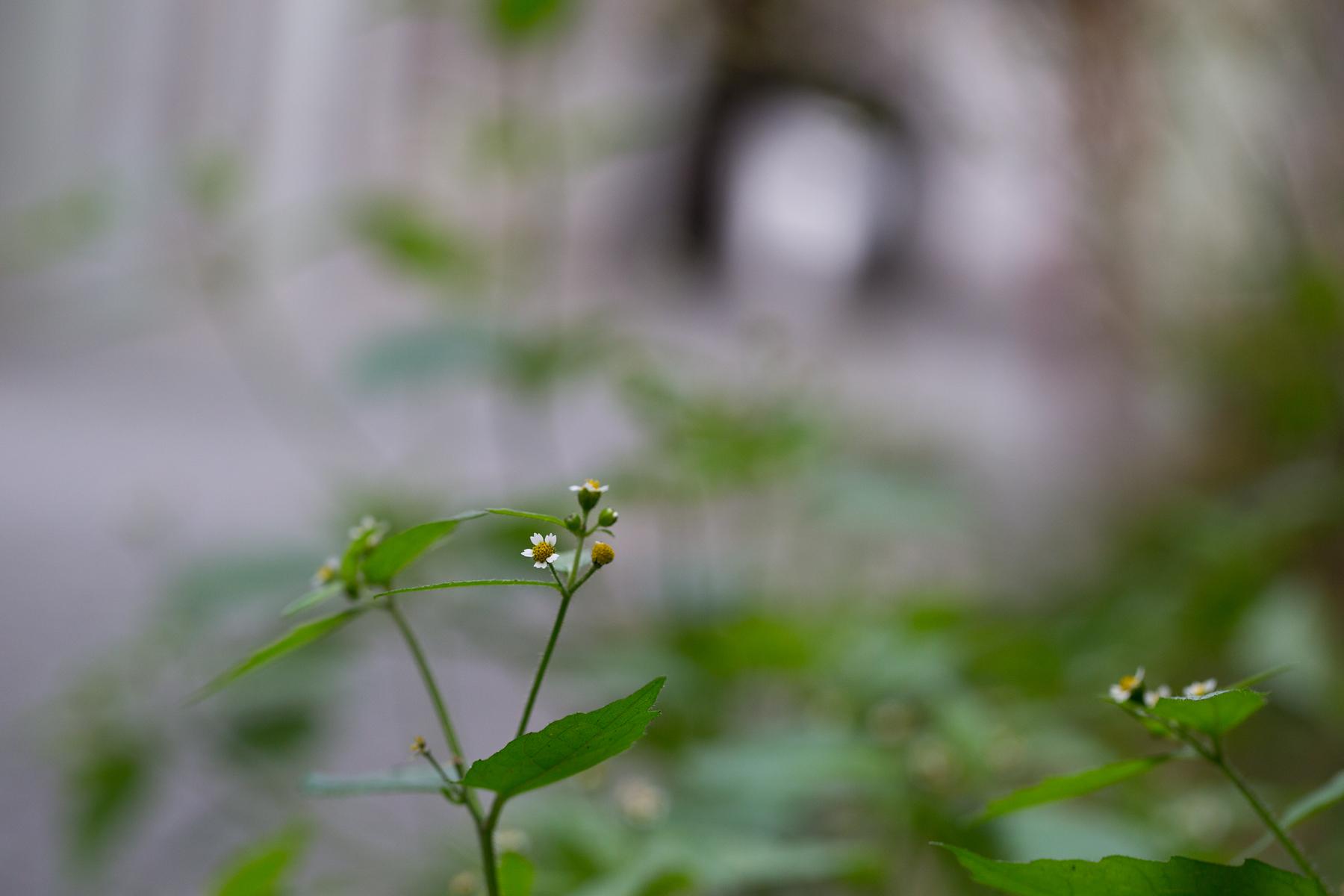 Kleinblütig