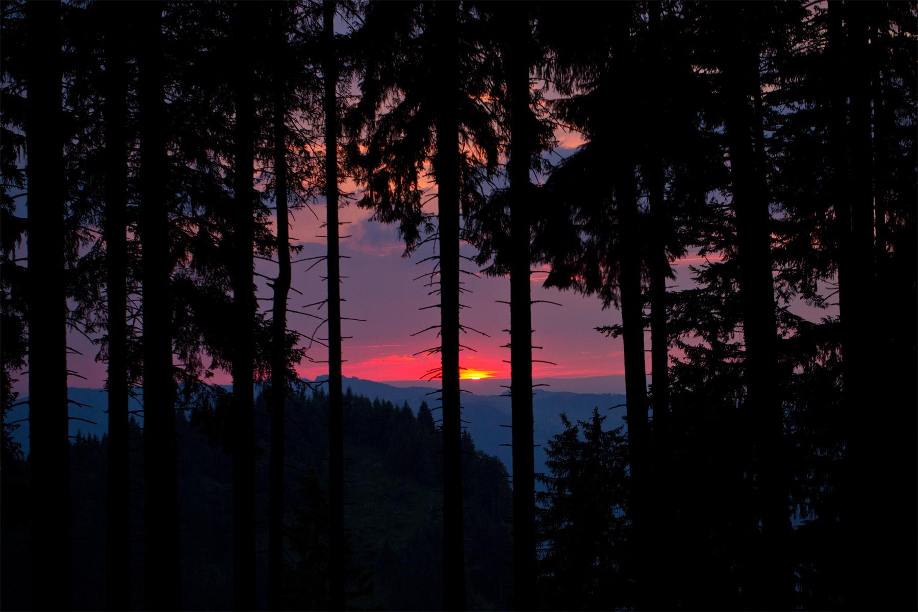 Untergehende Sonne im Wald