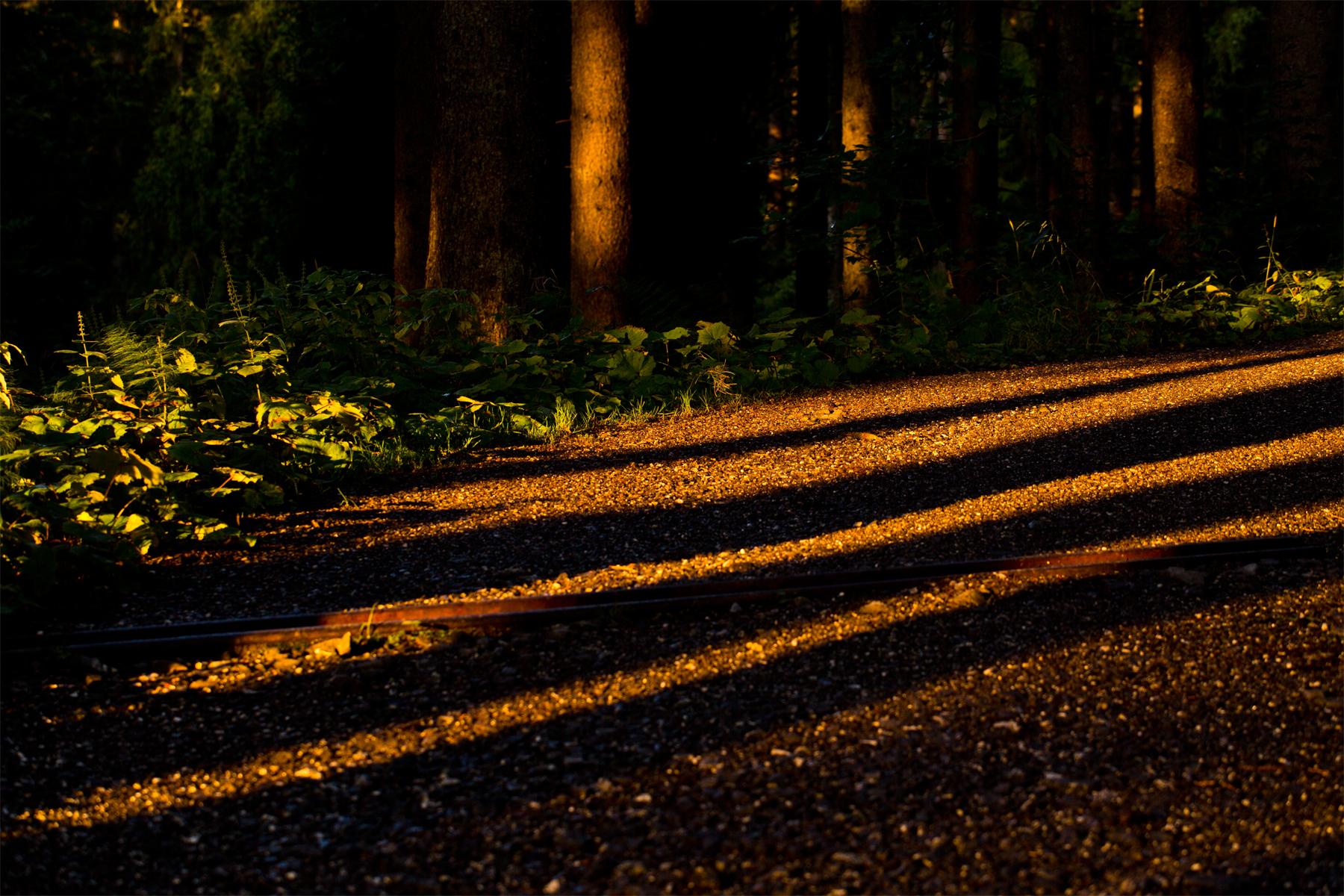 Gestreifter Forstweg