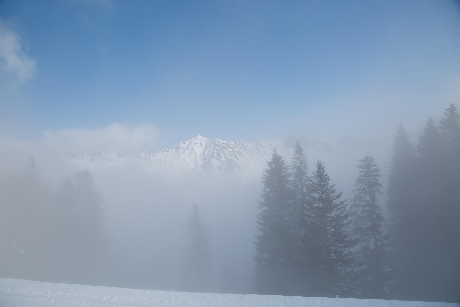 Löffelspitze durch Nebelschwaden