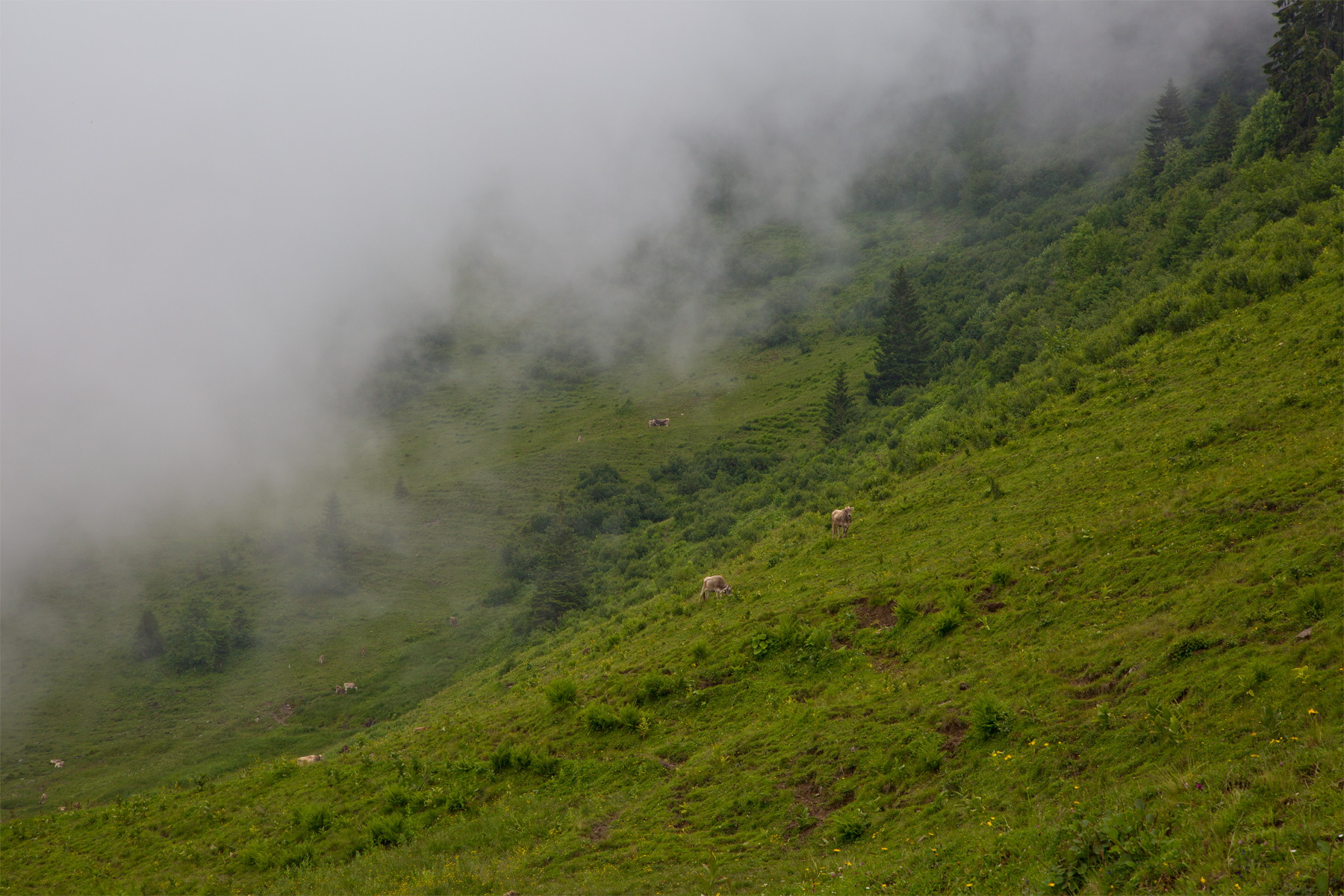 Viehweide unterhalb Kellaspitz