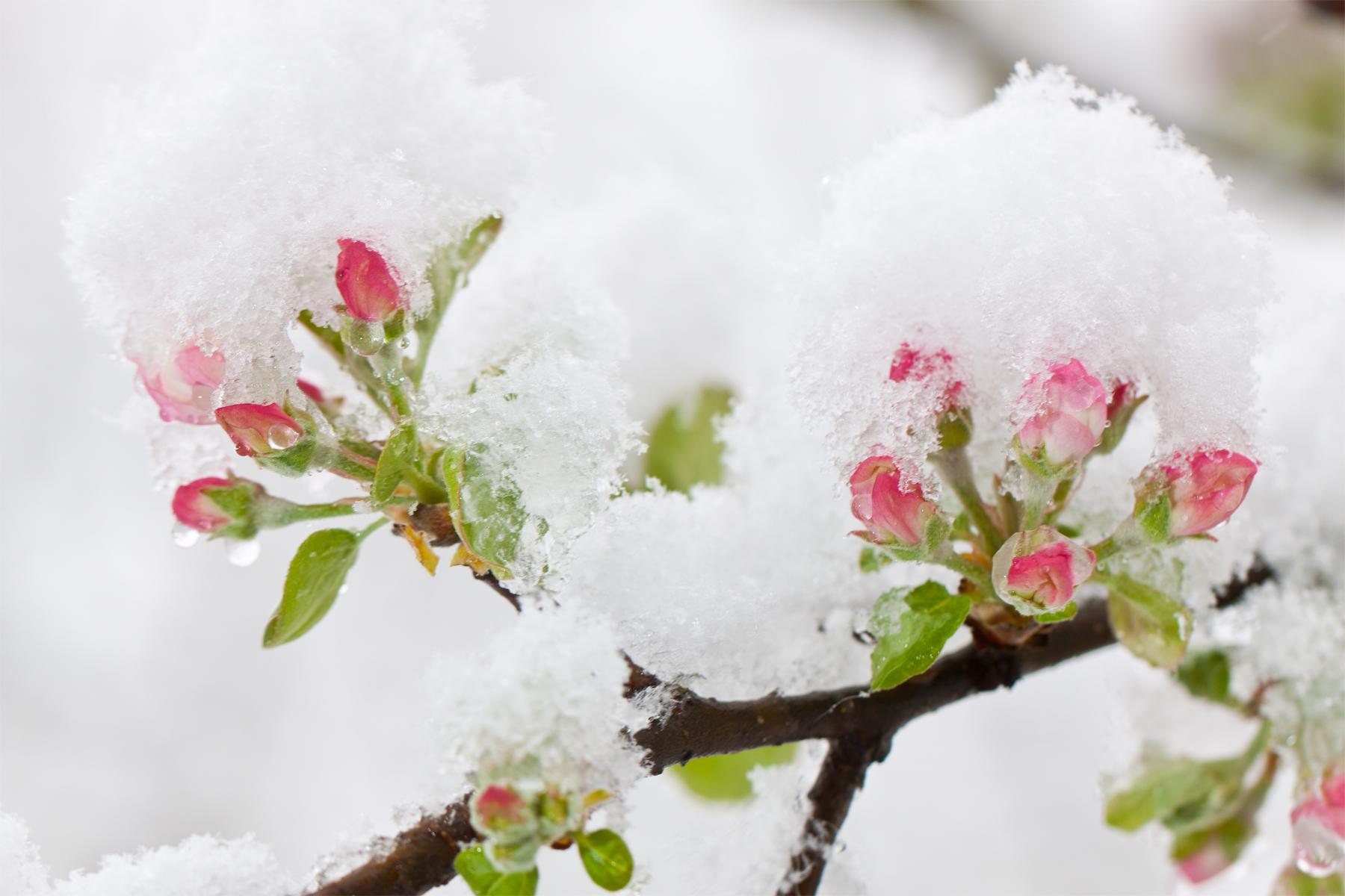 Rot-Grün-Braun-Schneeweiß