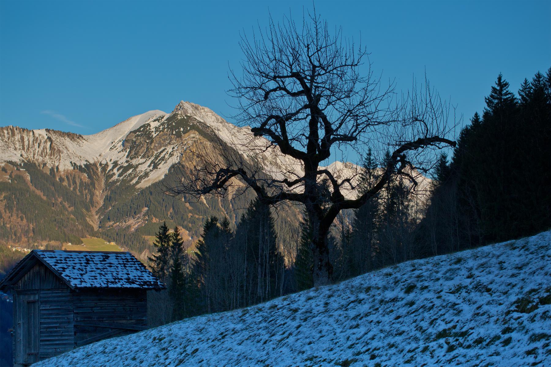 Großes Walsertal - am Abhang