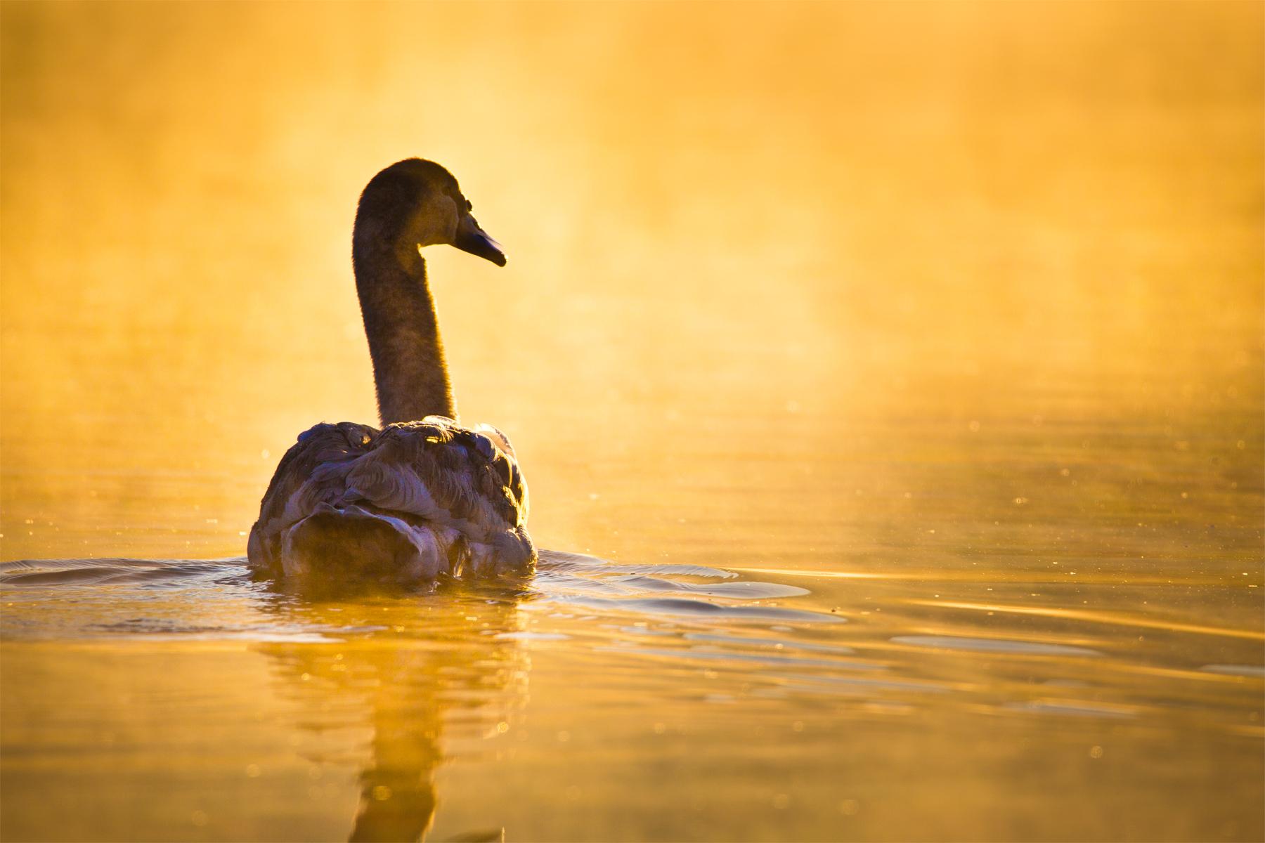 Im goldenen Wasser