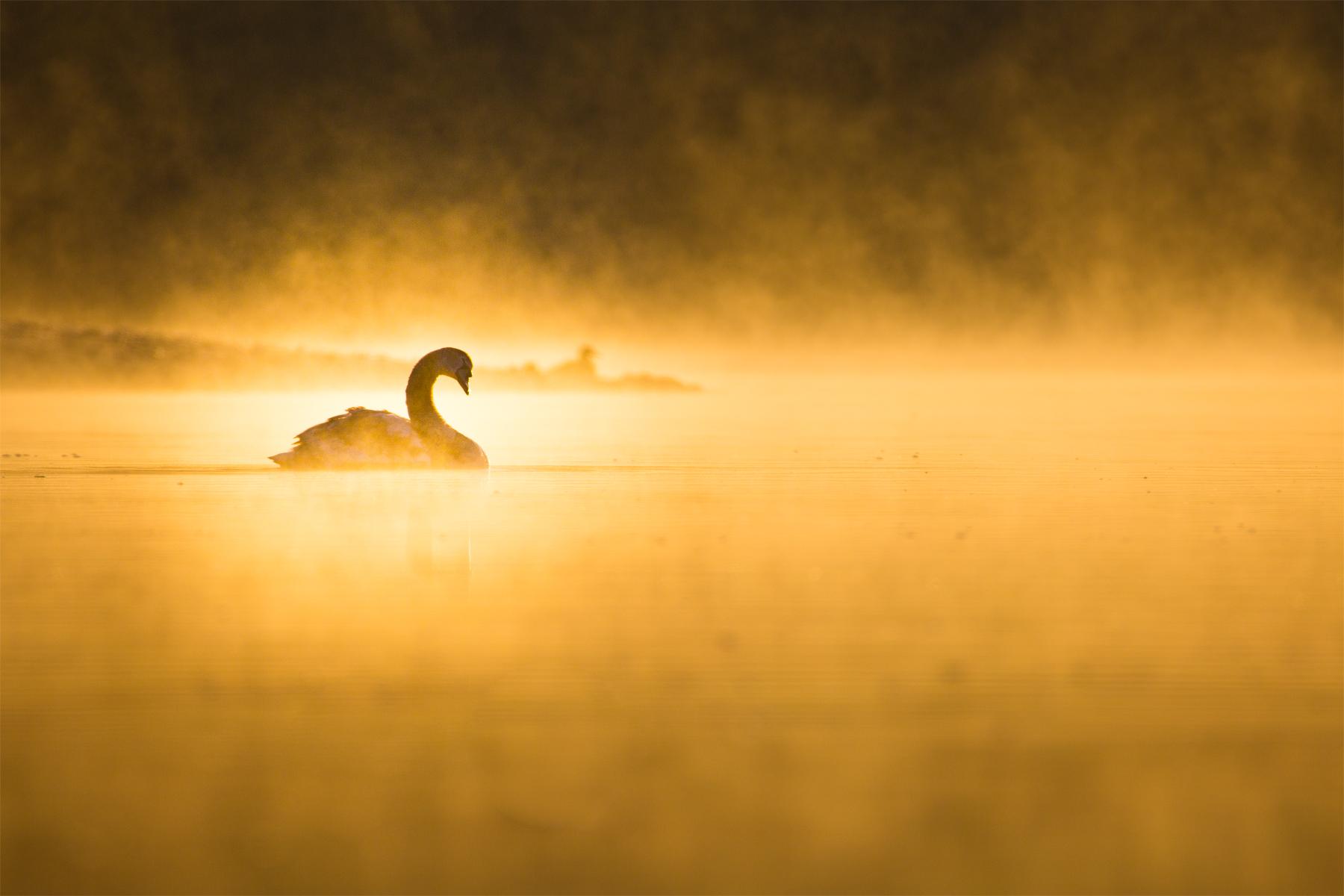 Nebelschwaden vergoldet