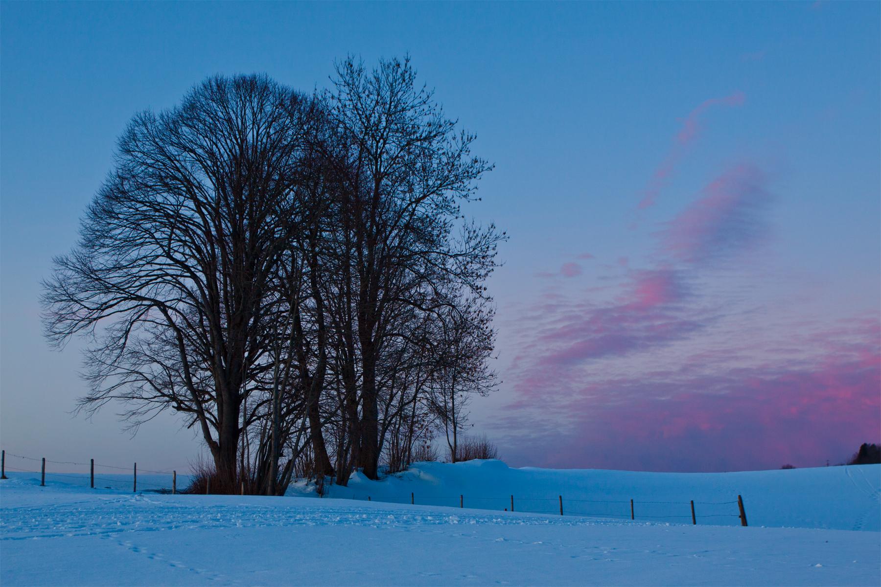 Schneeweiss und Rosarot