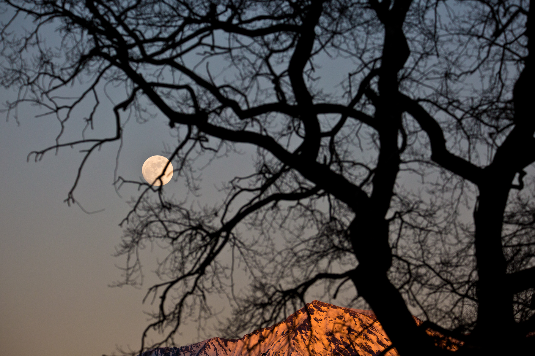 Hinterm Baum