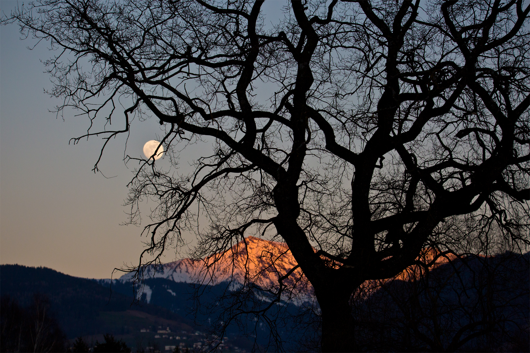 Gipfelleuchten hinterm Baum