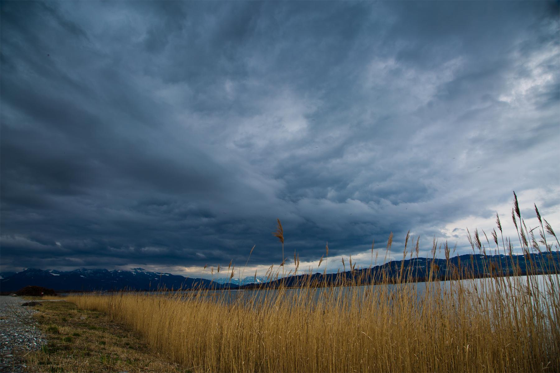 Bodensee-Lake Constance-Wasser-Wolken-Schilf