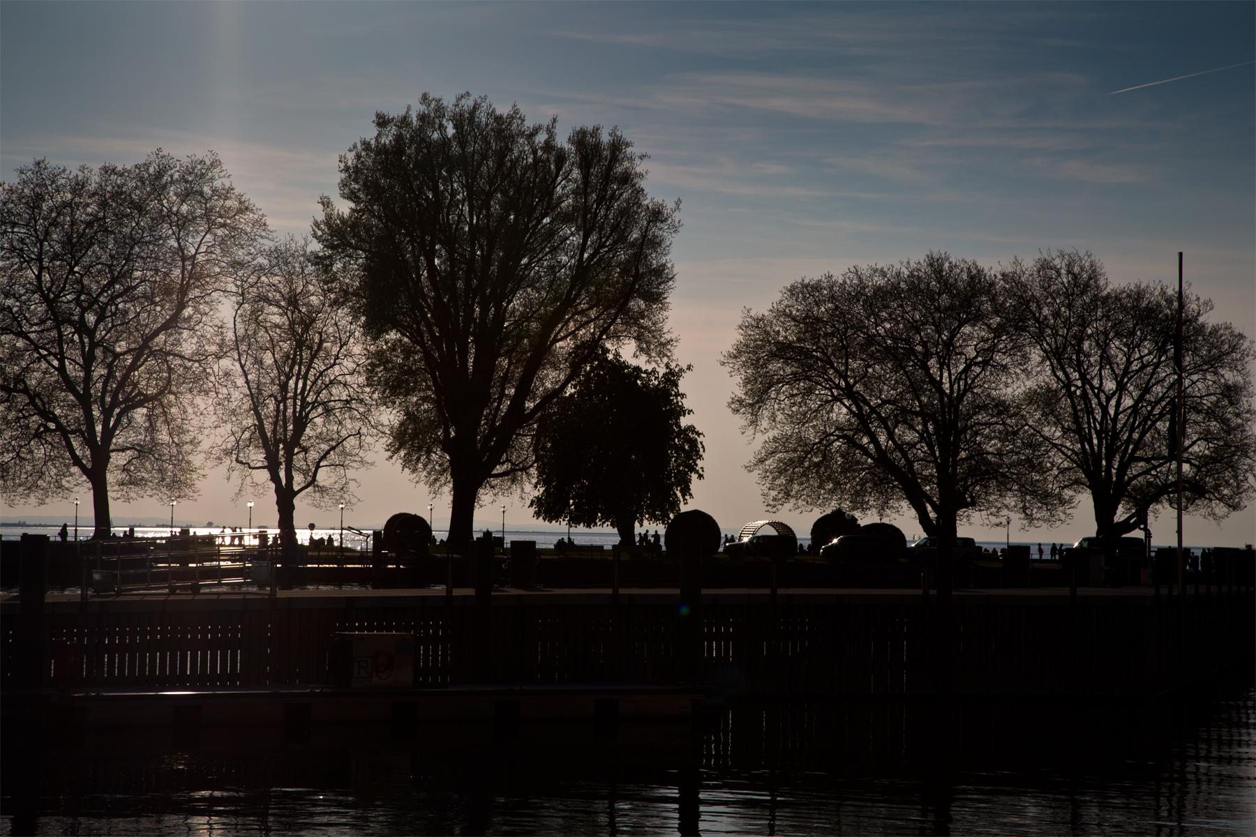Bregenz-Hafen-Bäume-Silhouette-Wasser-Bodensee-Vorarlberg-Lake Constance