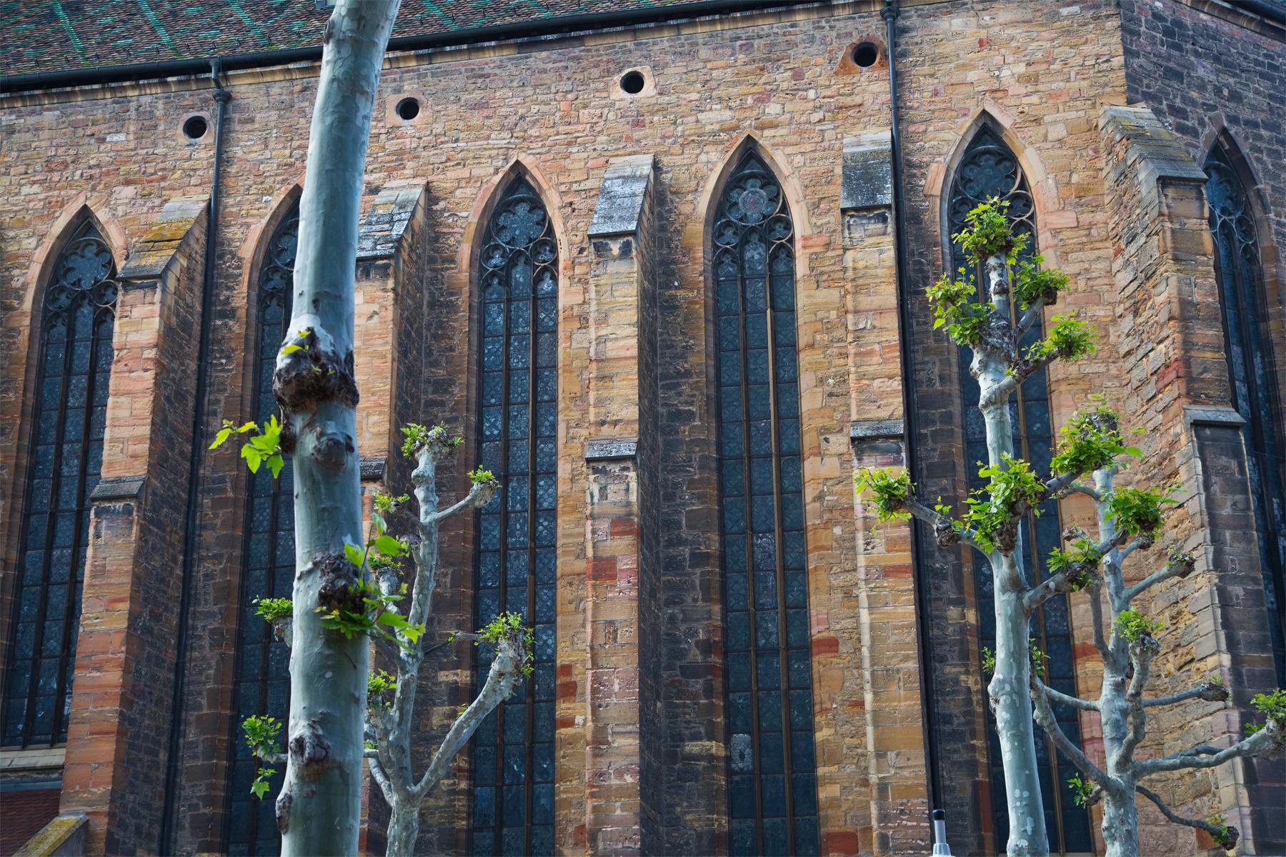 Bäume mit Kirchendetail