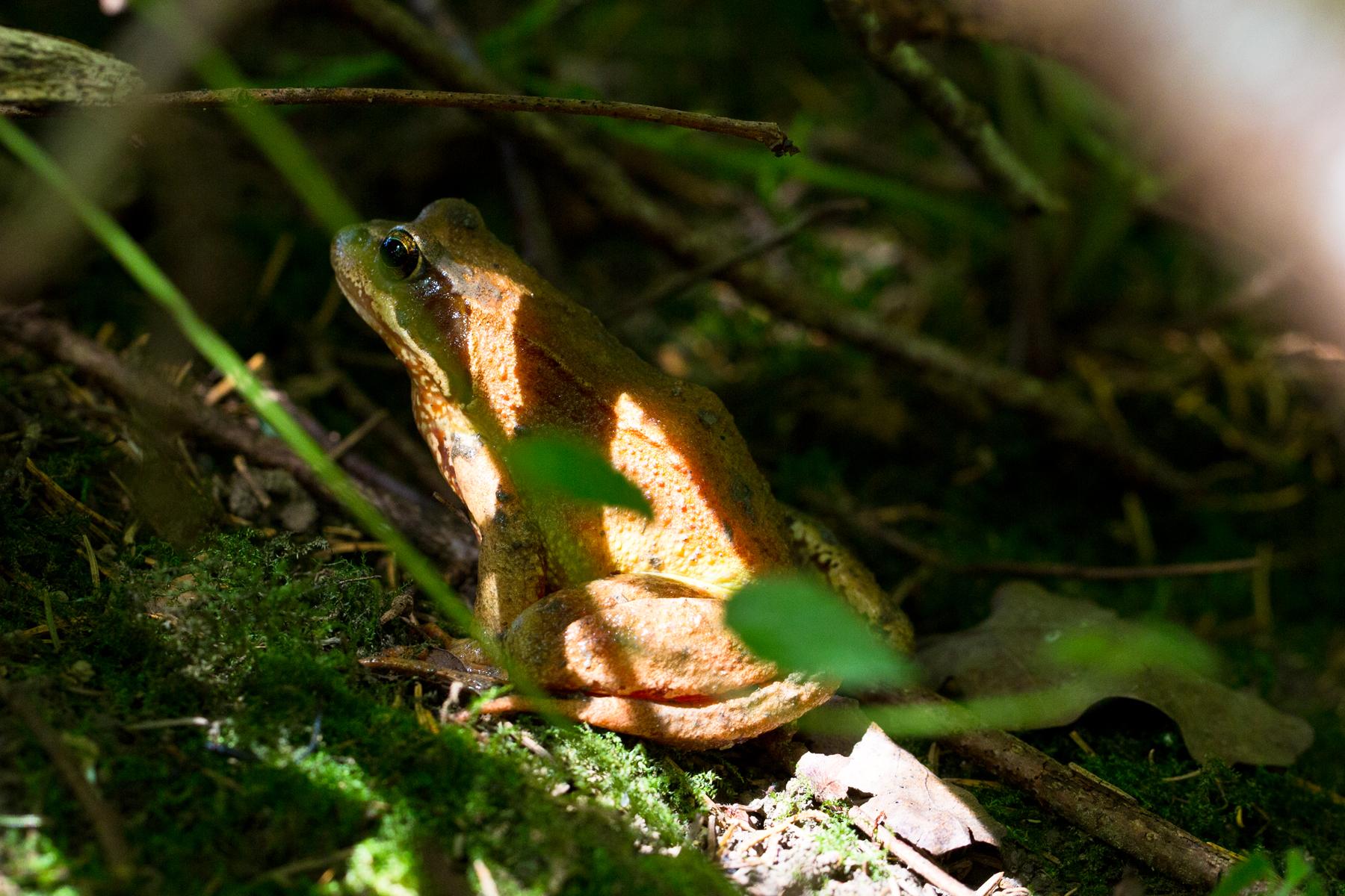 Frosch überbelichtet