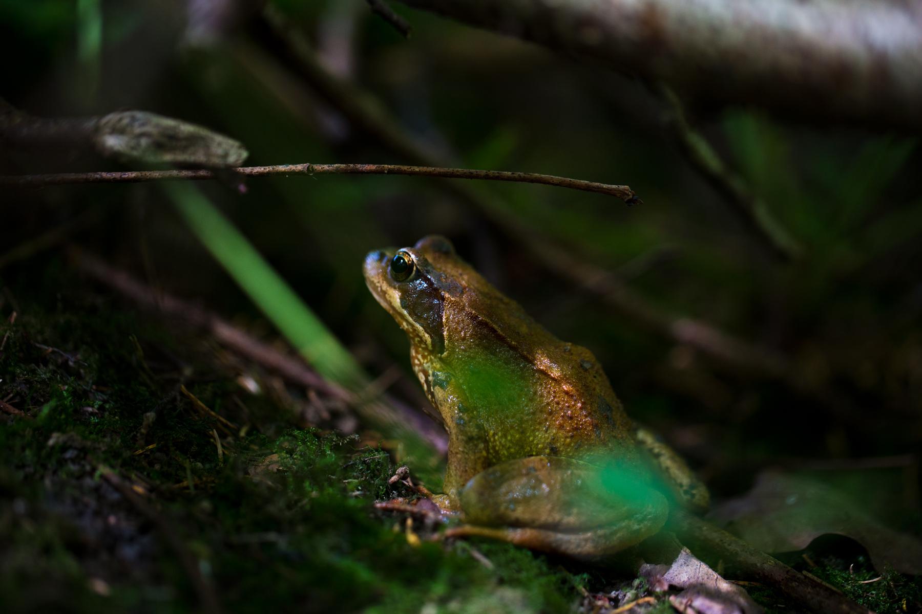 Frosch Frosch