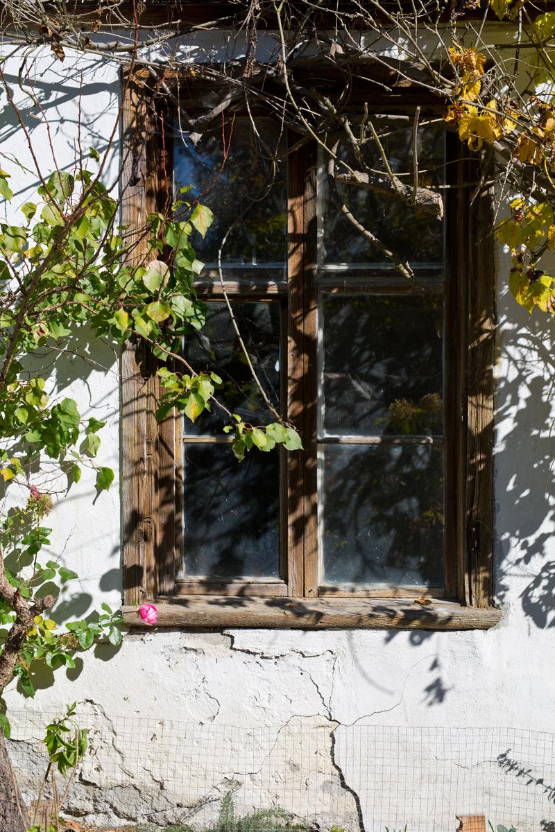 Fenster verwachsen