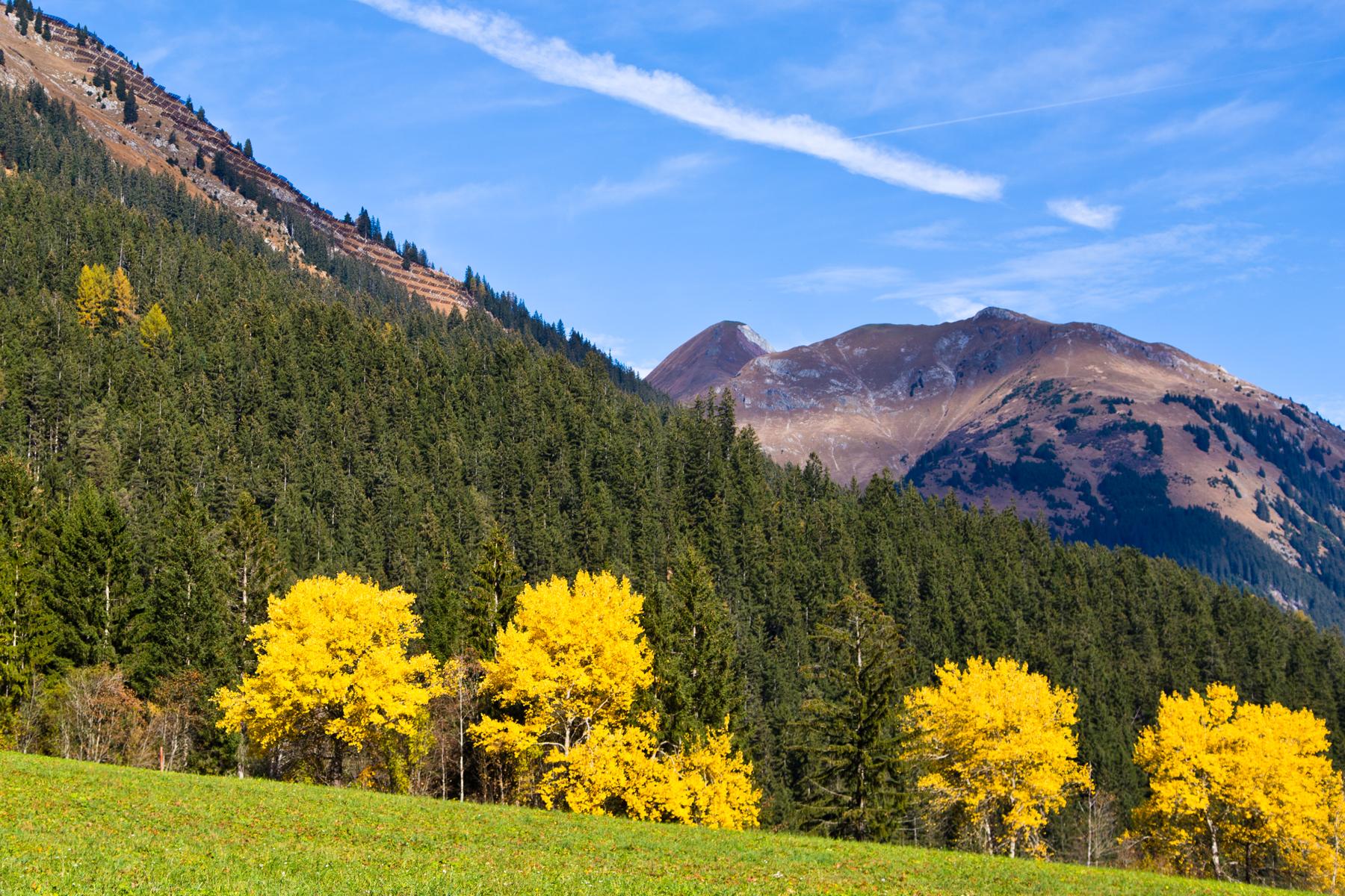 Baumgruppe gelb leuchtend