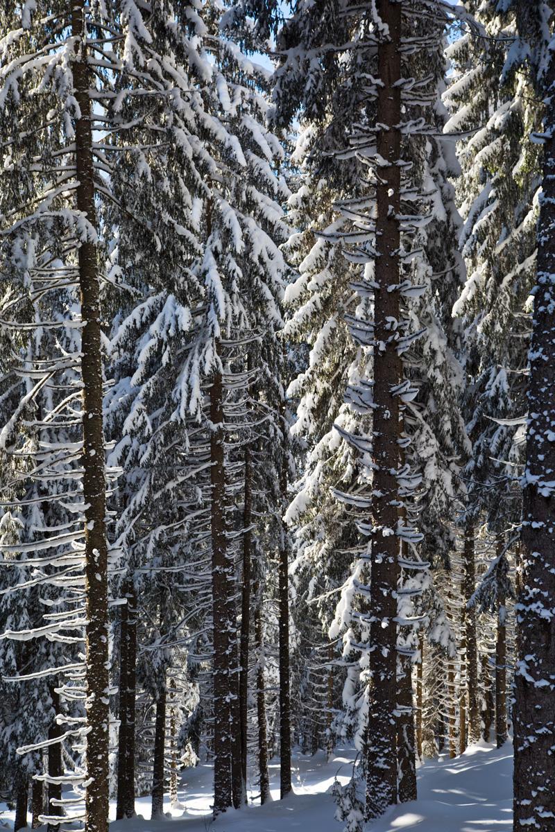 Hochwald im Schnee
